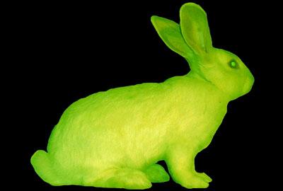 Transgenický svítící králíček (New Media Art 1 – BioArt)