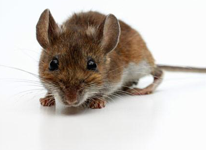 Vznik azánik dokonalého myšího ráje doktora Calhouna