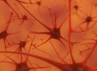 Neuralni sit