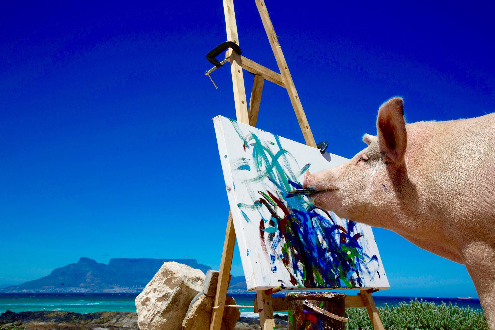 Pigcasso, prase vystavující vlastní malby