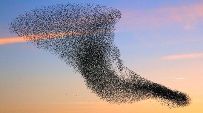 """Jak včelami inspirovaný """"lidský roj"""" dokáže lépe zvolit optimální volbu"""